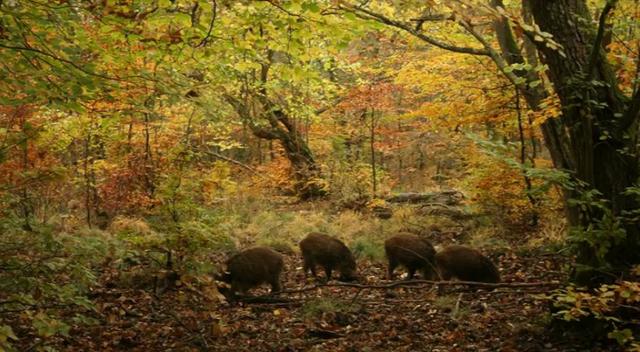 Sjette foredrag: Egen og skoven i vikingetiden