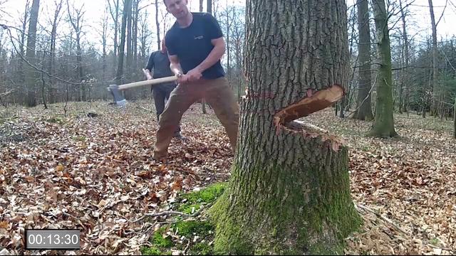Træ til Gislingebådens køl