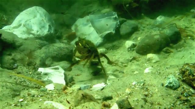 Marinarkæologiske undersøgelse ved Askø
